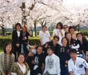 Hanami - Melihat bunga Sakura